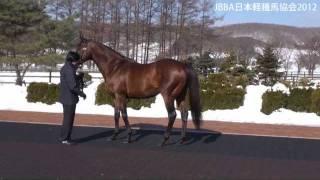 JBBA日本軽種馬協会種牡馬展示会2012 - エンパイアメーカー等12頭