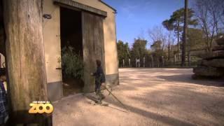 Ocelots, chimpanzé et hibou - Ep21 S3 - #SaisonAuZoo