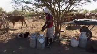 صناعة الحليب في بلد الماشية - موريتانيا | صنع في ألمانيا