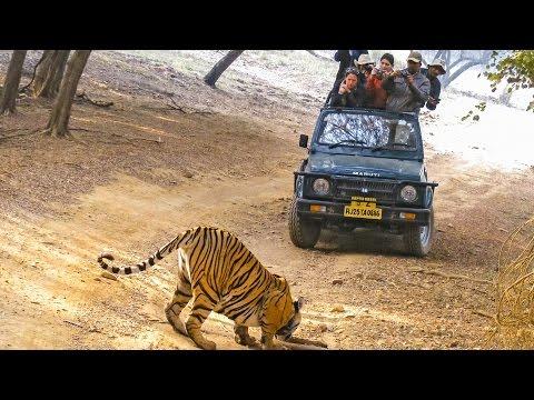 Indien »Einfach unglaublich!«