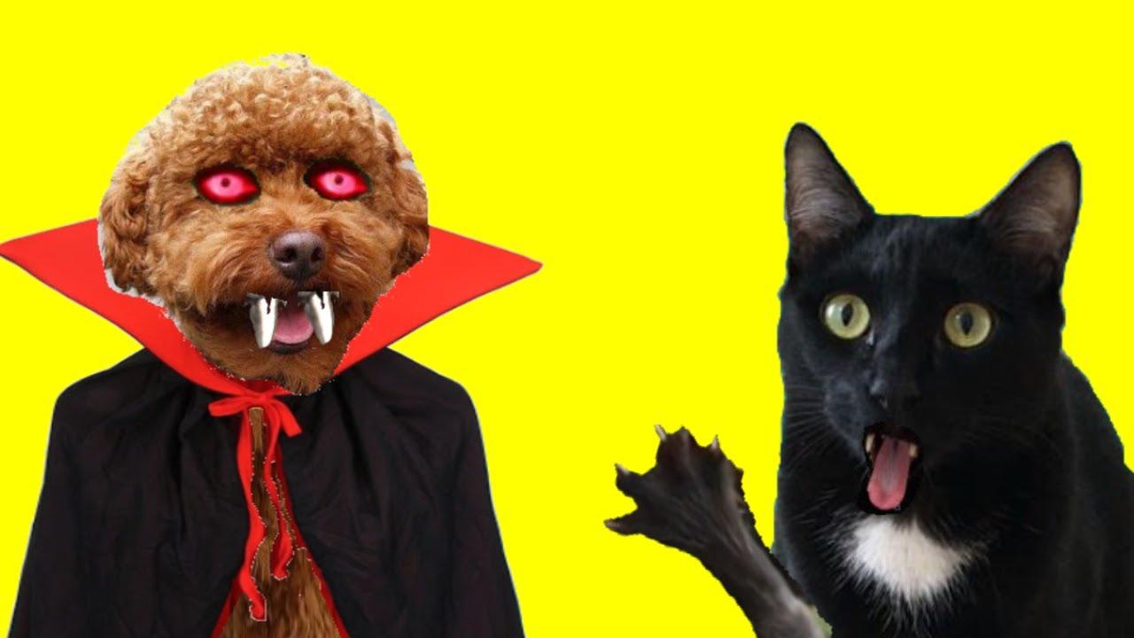 Gatos Luna y Estrella ¿mi perro es un vampiro en la vida real? / Videos de gatitos graciosos