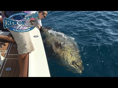 Amazing Florida Goliath Grouper Fishing Charter - Biggest Fish Ever For Birthday Boy - Deep Sea Fish