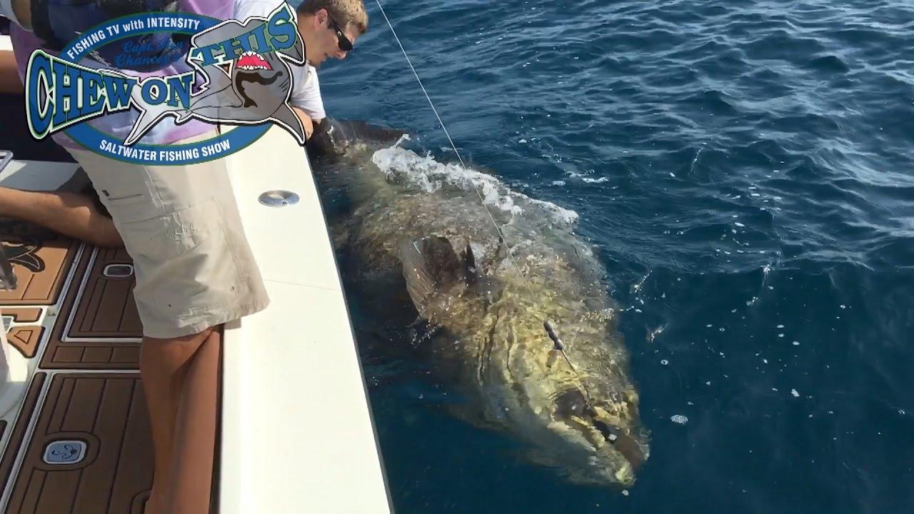 Amazing florida goliath grouper fishing charter biggest for Grouper fishing florida