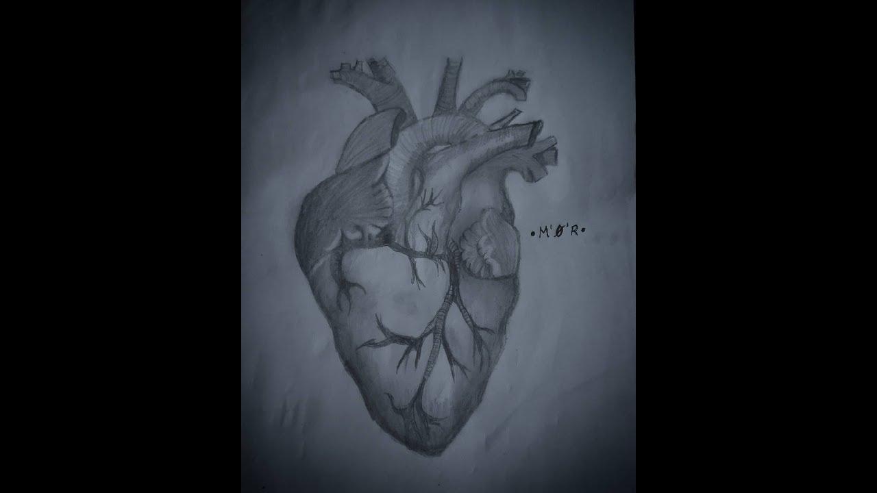Cómo Dibujar Un Corazón Humano A Lápiz Youtube