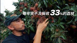 台客劇場》大學生拯救農業!每年來不及採收33%的荔枝