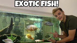 SURPRISING Paul Cuffaro with EXOTIC Fish!!