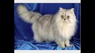 Корм для кошек иркутск