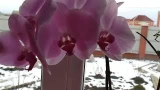 Пересадка орхидеи. Советы по уходу!