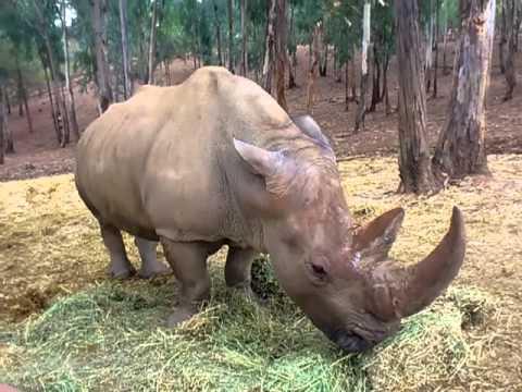 R mulo el rinoceronte de viveros valencia en la reserva - Entradas baratas castillo de las guardas ...