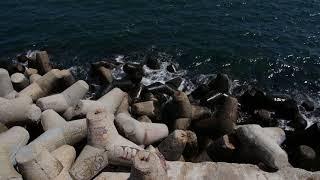 Морска гара акция по издирване на изчезнало дете