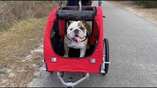 reuben-the-bulldog-the-new-ride