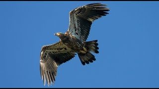 Introduction to Hawk Mountain Sanctuary