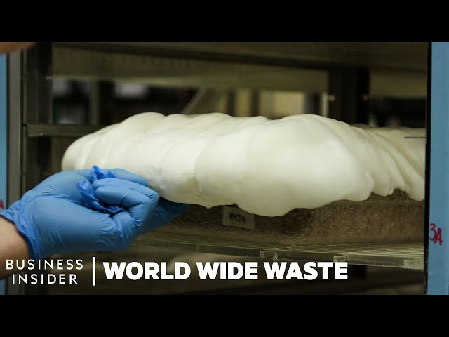 How Mushrooms Are Turned Into Bacon And Styrofoam | World Wide Waste