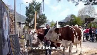 La fête des vaches à faverges en 2013