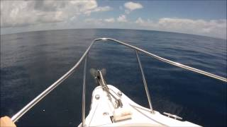 Mac Tuna off Centipede Reef