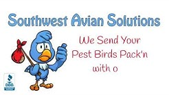 SouthWest Avian Solutions   Bird Control Solutions