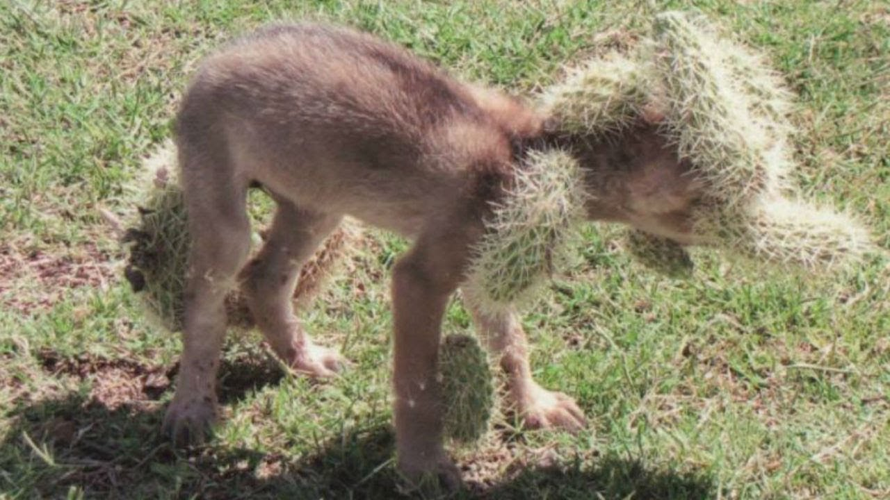 when-a-woman-spotted-this-baby-creature-in-desperate-need-she-immediately-called-for-help
