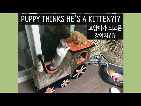 KITTEN TEACHES PUPPY HOW TO PLAY WITH CAT TOYS!