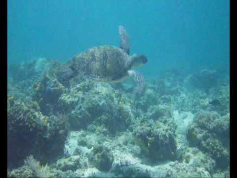 Swimming with the Turtles, Celebes sea, Borneo
