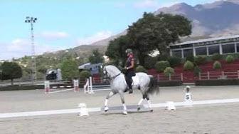 Myytävänä eri tasoisia andalusialaisia hevosia