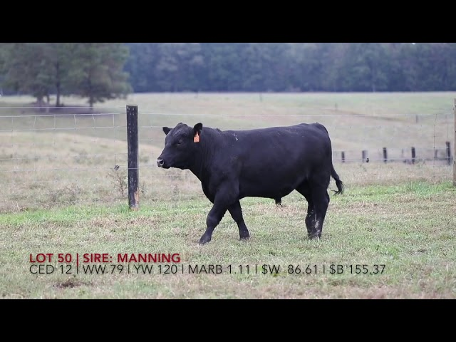 Edgewood Angus Lot 11