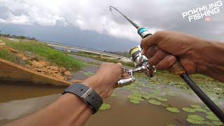 Soft Frog Disambar Burung Raja Udang 2 kali   Ultralight Fishing screenshot 4