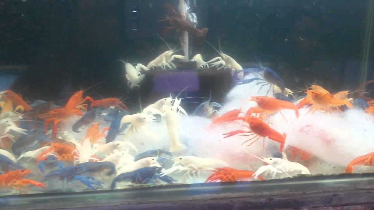 Fish aquarium in kurla - Kurla Fish Festival