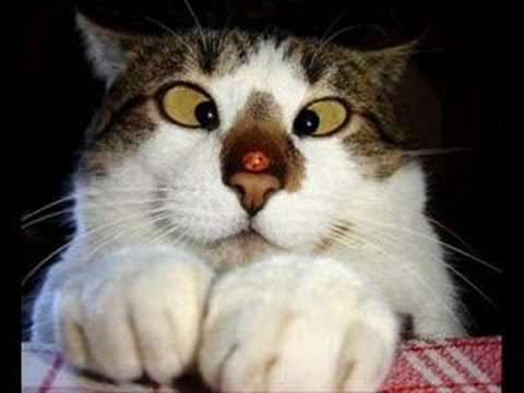 Very funny cats 10 youtube very funny cats 10 voltagebd Gallery