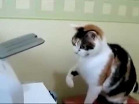 samir the cat vs