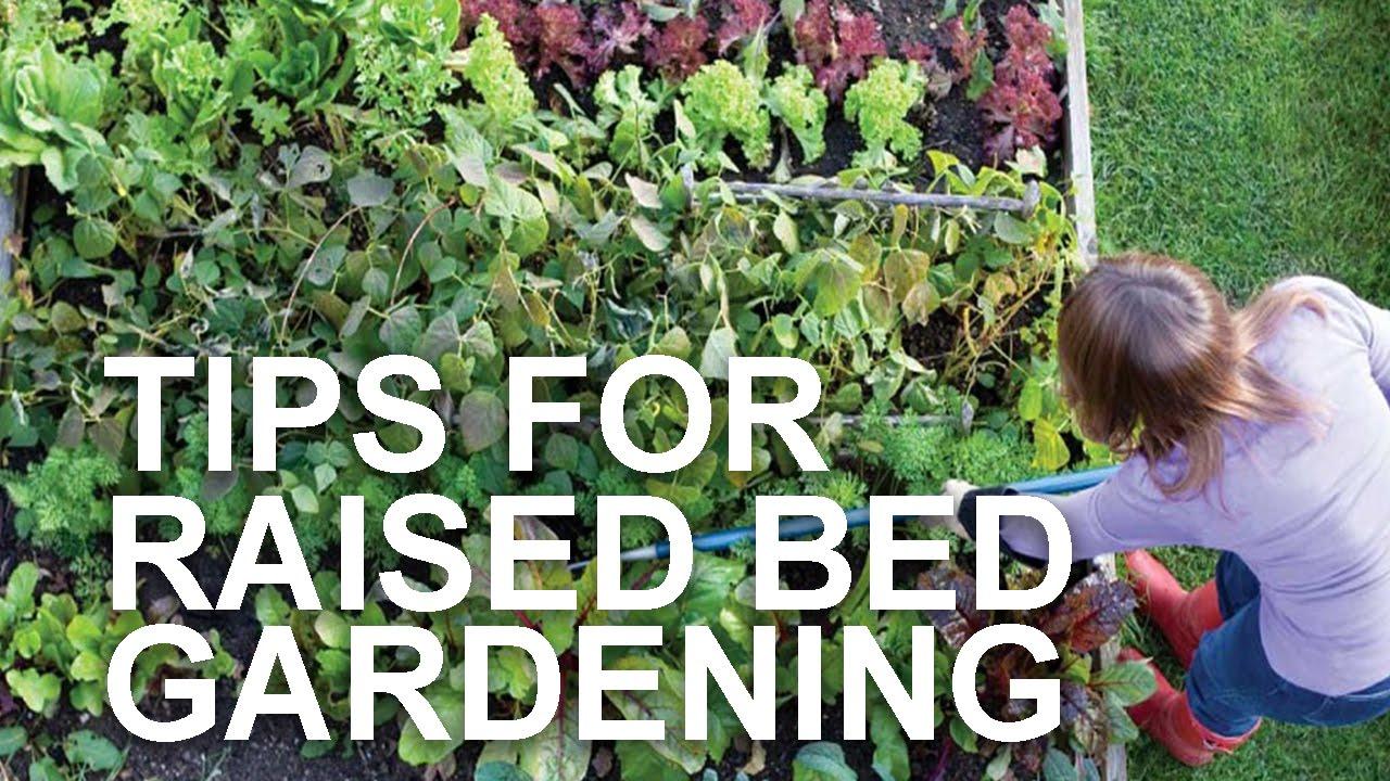Tips For Raised Bed Gardening