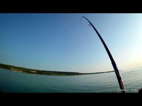 Ribolov Na Moru Sa Obale- Komarča- Orada 2,63kg