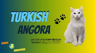 Turkish Angora Cat Care  Funny Cats