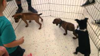 Cute Kid plays with Cute Puppies