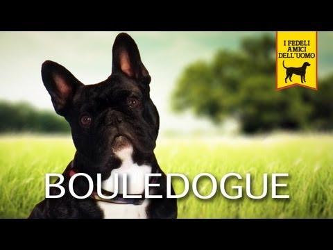 BOULEDOGUE Trailer Documentario