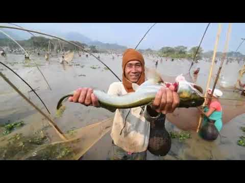 Indian villagers hold communal fishing event in Assam state
