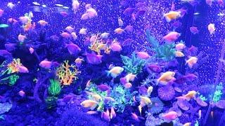 Океанариум с акулами, пираньями и замечательными рыбками