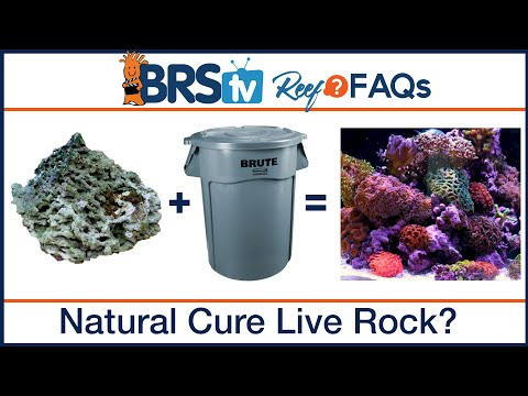 Natural Curing Live Rock For A Saltwater Fish Tank | Reef FAQs