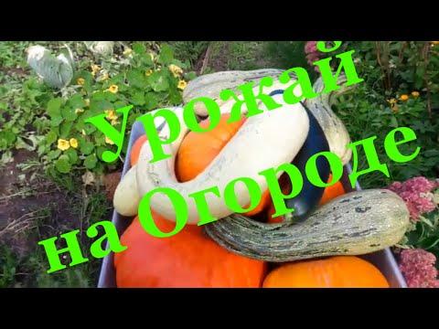 Уборка урожая 2019 / Огород где все растет