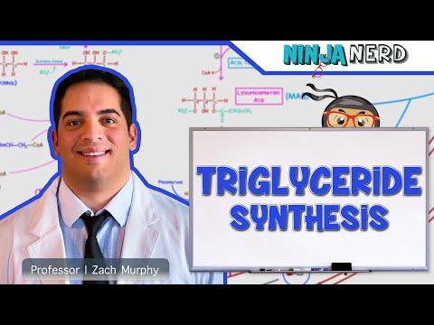 Metabolism | Triglyceride Synthesis