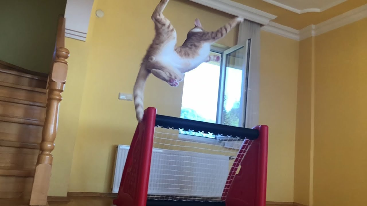 Goalkeeper Cat - impossible saves in slow Motion