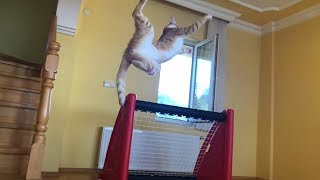 Goalkeeper Cat ready for the new season!! Impossible saves in Slow Motion!!