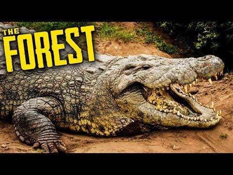 THE FOREST - CAÇADORES DE JACARÉ | Ep.08 (Co-op Survival Horror)