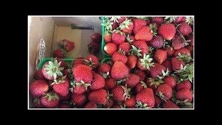 Montana brand frozen strawberries recalled by Adonis | CBC News