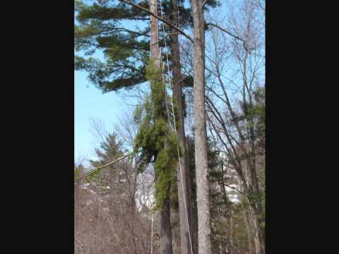 Elvis Tree Climber Extraordinaire