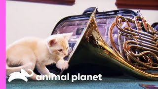 Musical Kitten Puts On A Performance For Her Family | Too Cute!