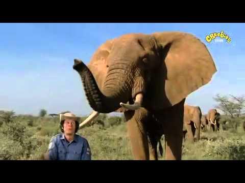 Andy's Wild Adventures - Elephant Safari