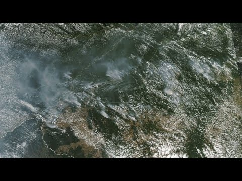 حرائق غابات الأمازون تسجل مستويات قياسية  - نشر قبل 48 دقيقة