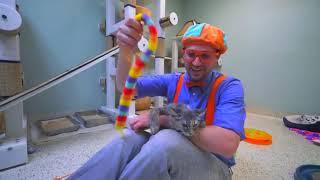 Blippi Toys! Blippi Visits an Animal Shelter Learn Animals for Children and The Pet Song