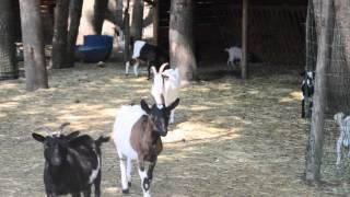 Family Park - Animaux de la ferme