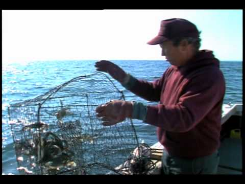The Chesapeake Bay Dead Zone: Bay Farms And Blue Crabs